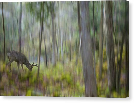 The Moss Covered Forest Canvas Print
