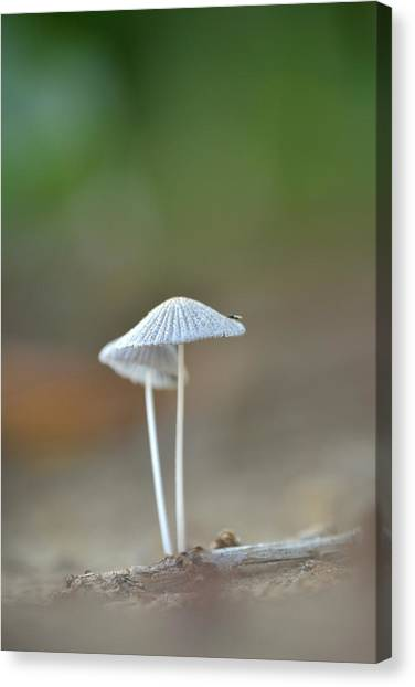 The Mushrooms Canvas Print