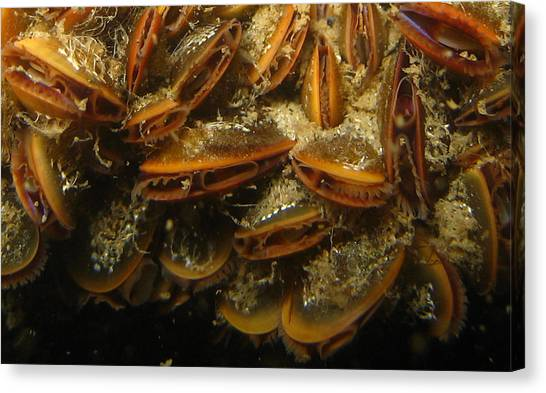Saltwater Life Canvas Print - The Mussel Group by Paul Ward