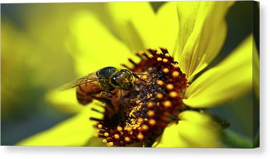 What Do You Want Canvas Print by Gilbert Artiaga
