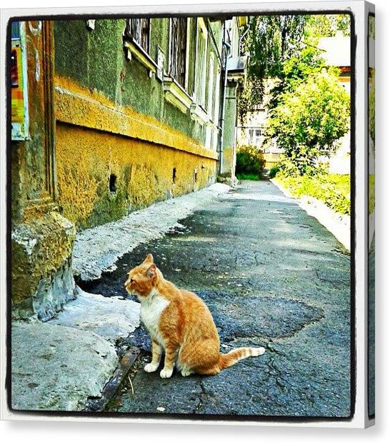 Russia Canvas Print - The Old Yard. This Cat Lives Here. #old by Igor Che 💎