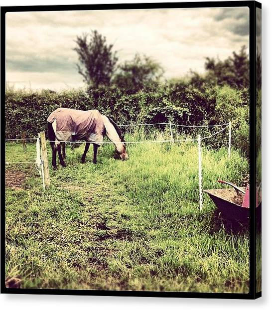 Ponies Canvas Print - The Only Good Grass He's Had In 2 by Caitlin Hay