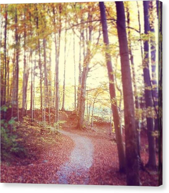 Forest Paths Canvas Print - #the #path by Charlotte Ashu