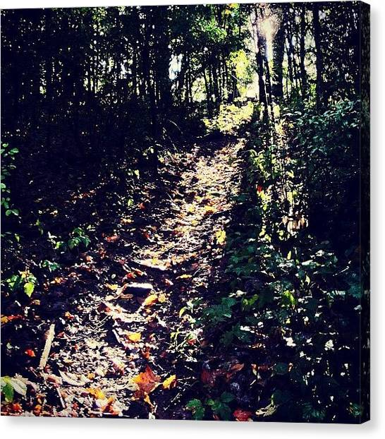 Forest Paths Canvas Print - The Path Is Clear.  What's Stopping by Mark Scheffer