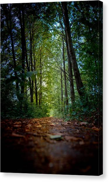 The Pathway In The Forest Canvas Print
