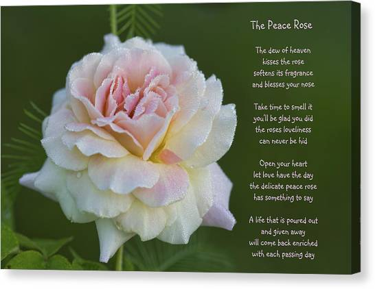 The Peace Rose Canvas Print