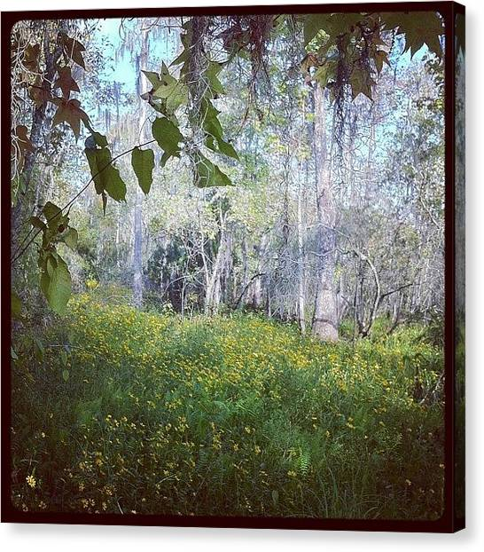 Swamps Canvas Print - The Prettiest Swamp by Ninette Quiles