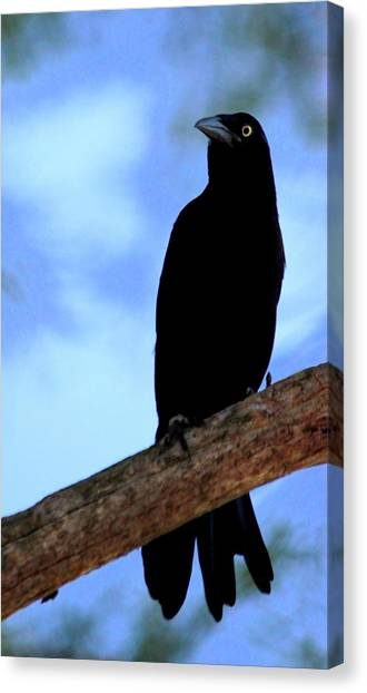 The Raven Canvas Print by Lisa Scott
