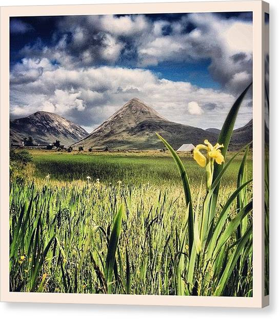 Irises Canvas Print - The Red Cuillins, Isle Of Skye by Robert Campbell