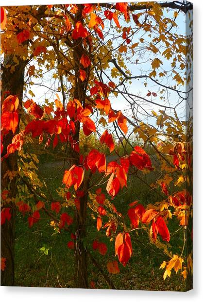 Dream Catcher Gallery Canvas Print - The Reds Of Autumn by Julie Dant