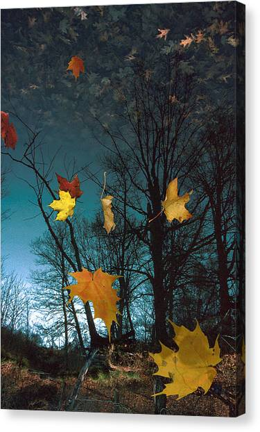 The Reflected Mind Canvas Print