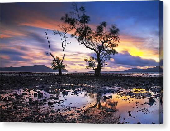 The Reflex Of Tree In Sunset Canvas Print by Arthit Somsakul