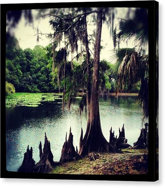Swamps Canvas Print - The Riverank's Teeth by Dustin Goolsby