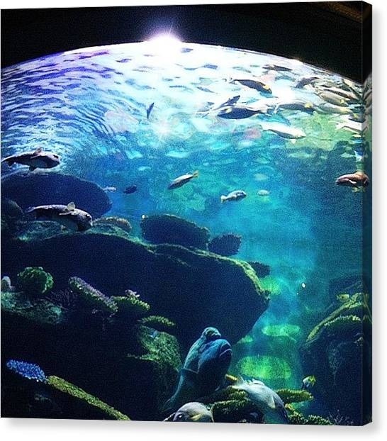 Owls Canvas Print - The Round Tank In Siam Ocean World by Owl Town