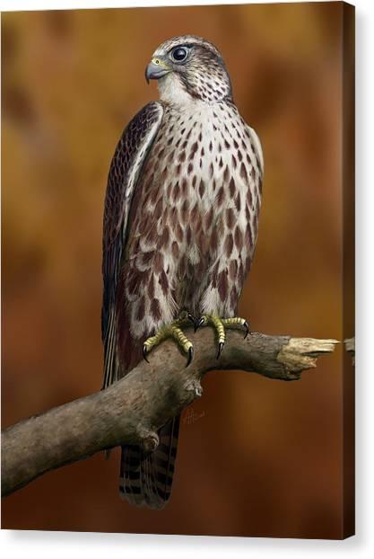 The Saker Falcon Canvas Print by Deak Attila