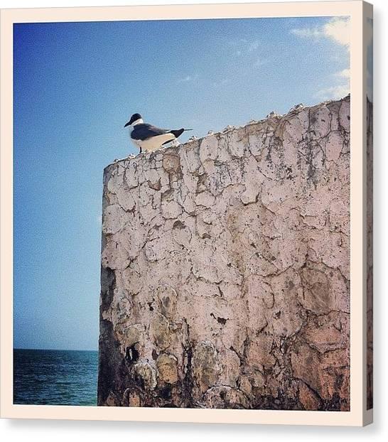 Tropical Birds Canvas Print - The Seagull Watcher #ocean #sea #pier by Sebastiaan Van der Graaf