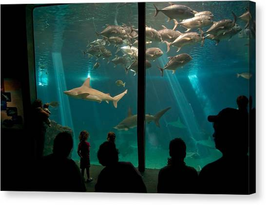 Canvas Print featuring the photograph The Shark Tank by Margaret Pitcher