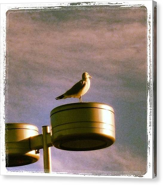 Seagulls Canvas Print - The Small Details We Miss Sometimes In by Luis Alberto