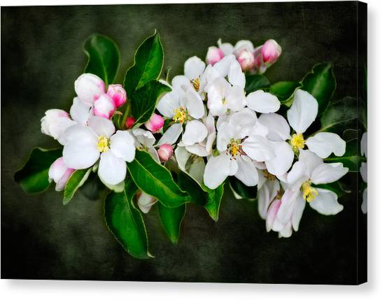 The Smell Off Spring Canvas Print