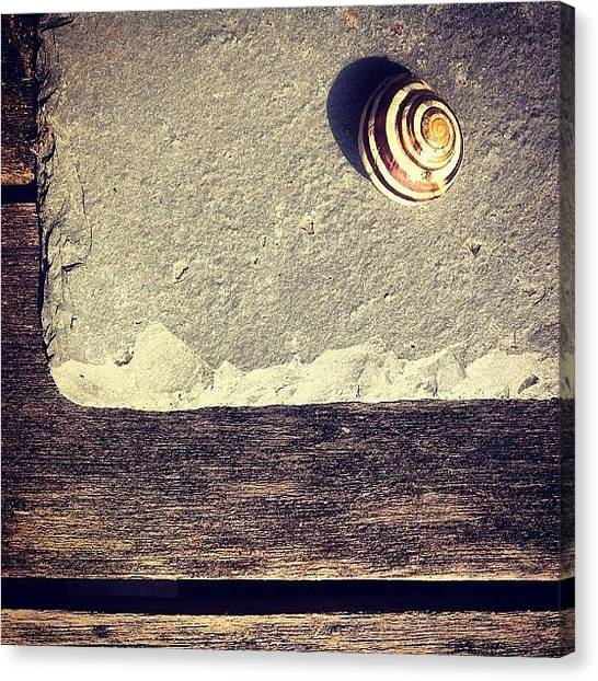 Still Life Canvas Print - The Snail by Nic Squirrell