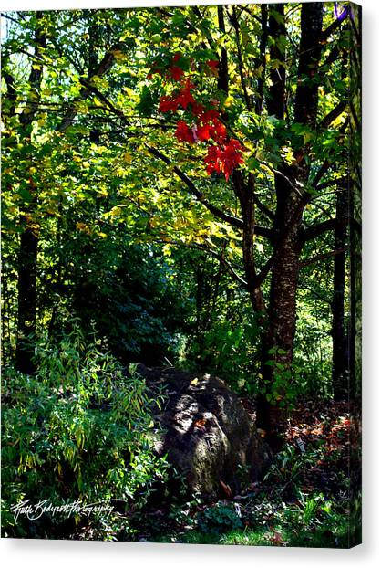 The Start Of Fall Color Canvas Print by Ruth Bodycott