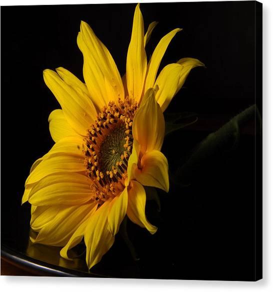 The Sun Flower  Canvas Print by Davor Sintic