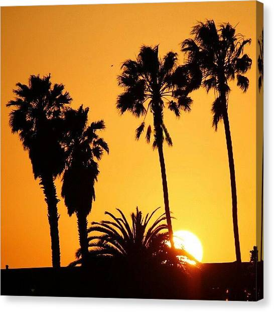 Palm Trees Sunsets Canvas Print - The Sunset  by San Gill