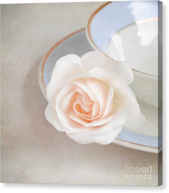 The Sweetest Rose Canvas Print