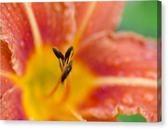The Tiger Lily Canvas Print by Margaret Pitcher