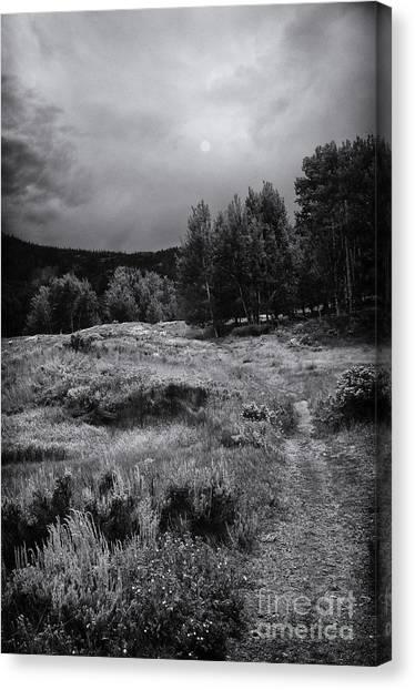 The Trail Canvas Print by David Waldrop