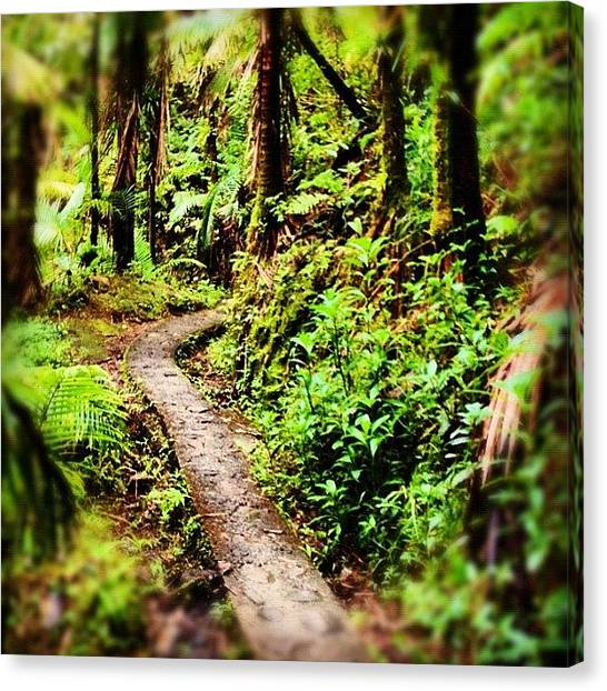 Rainforests Canvas Print - The Trail by Summer Cloud