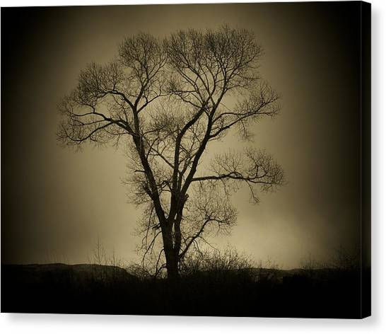 The Tree Canvas Print by Big E Photography