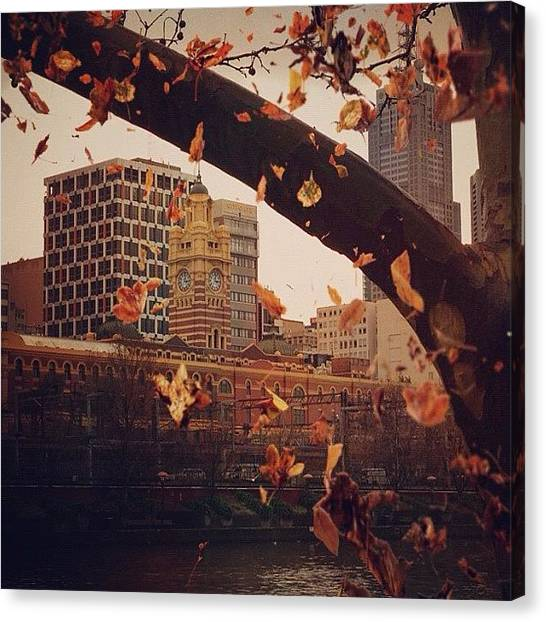Autumn Leaves Canvas Print - The Trees In Melbourne by Carsten Zehmisch