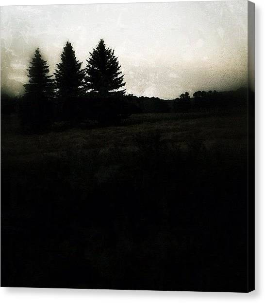 Manitoba Canvas Print - The Trees by Jessica Mutimer