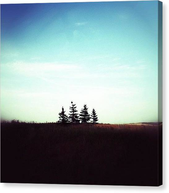 Manitoba Canvas Print - The Trees Pt 2 by Jessica Mutimer