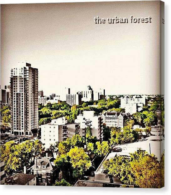 Manitoba Canvas Print - The Urban Forest by Jessica Mutimer
