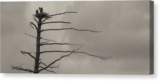 The Vulture Tree Canvas Print by Artist Orange