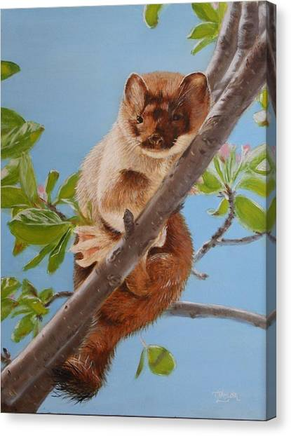 The Weasel Canvas Print