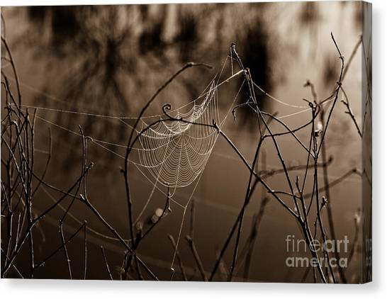 The Web Canvas Print by John Stanisich
