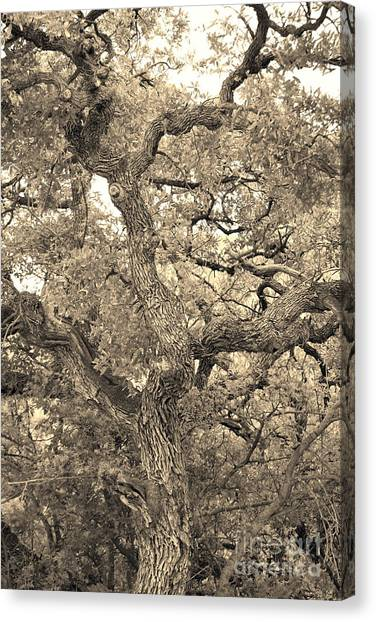 The Wicked Tree Canvas Print