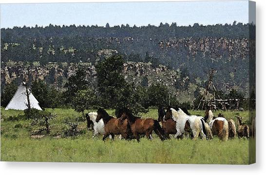 The Wild Mustangs In The Black Hills Canvas Print