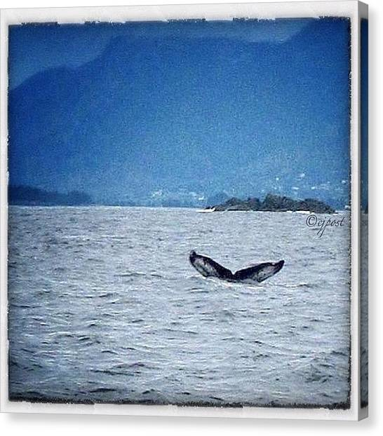 Whales Canvas Print - There Really Was A Whale! #sitka by Cynthia Post