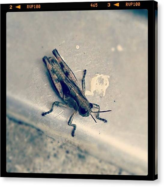 Grasshoppers Canvas Print - There Were Birds Circling Above, So I by Kel Hill