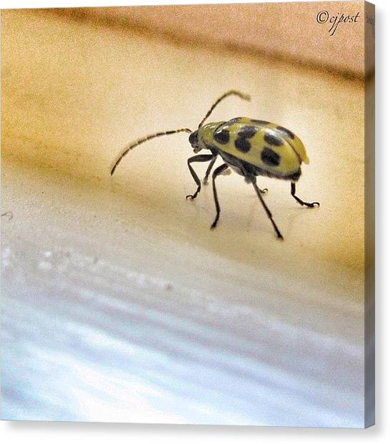 Beetles Canvas Print - There's A Bug In My House #bug by Cynthia Post