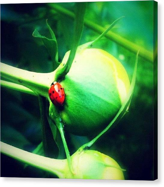 Ladybugs Canvas Print - There's A Song About Ladybugs But The by Mommy Inkwell