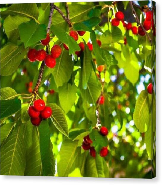 Fruit Trees Canvas Print - These Have Started To Fall. There Are by Becca Watters