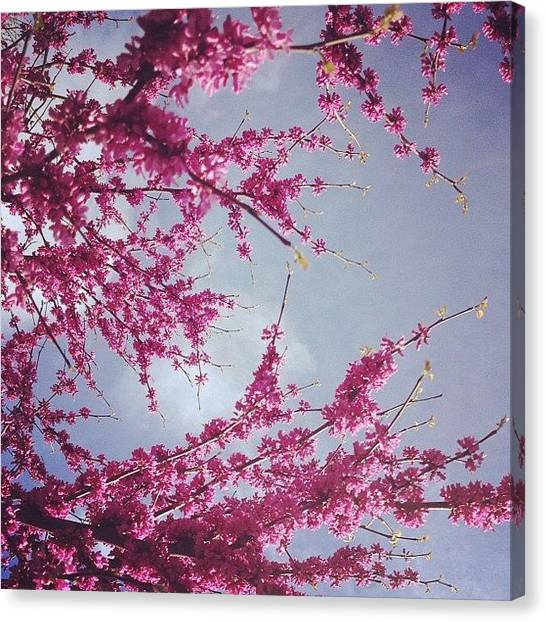 Apples Canvas Print - This Above All by Apple