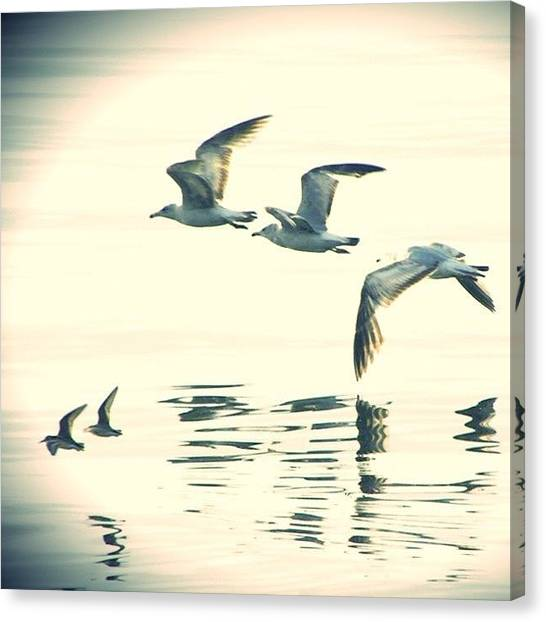 Seagulls Canvas Print - This Could Really Be The Good Life by Jessie Schafer