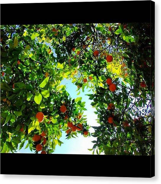 Fruit Trees Canvas Print - This End Up by Jennifer OHarra