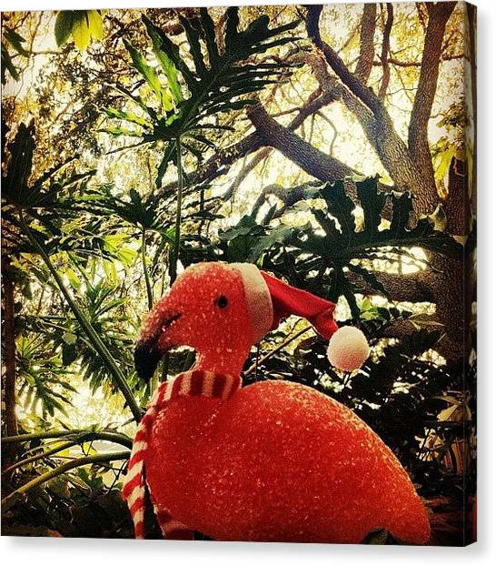 Flamingos Canvas Print - This Guy's Chillin In The Backyard by Dylan Hotfire